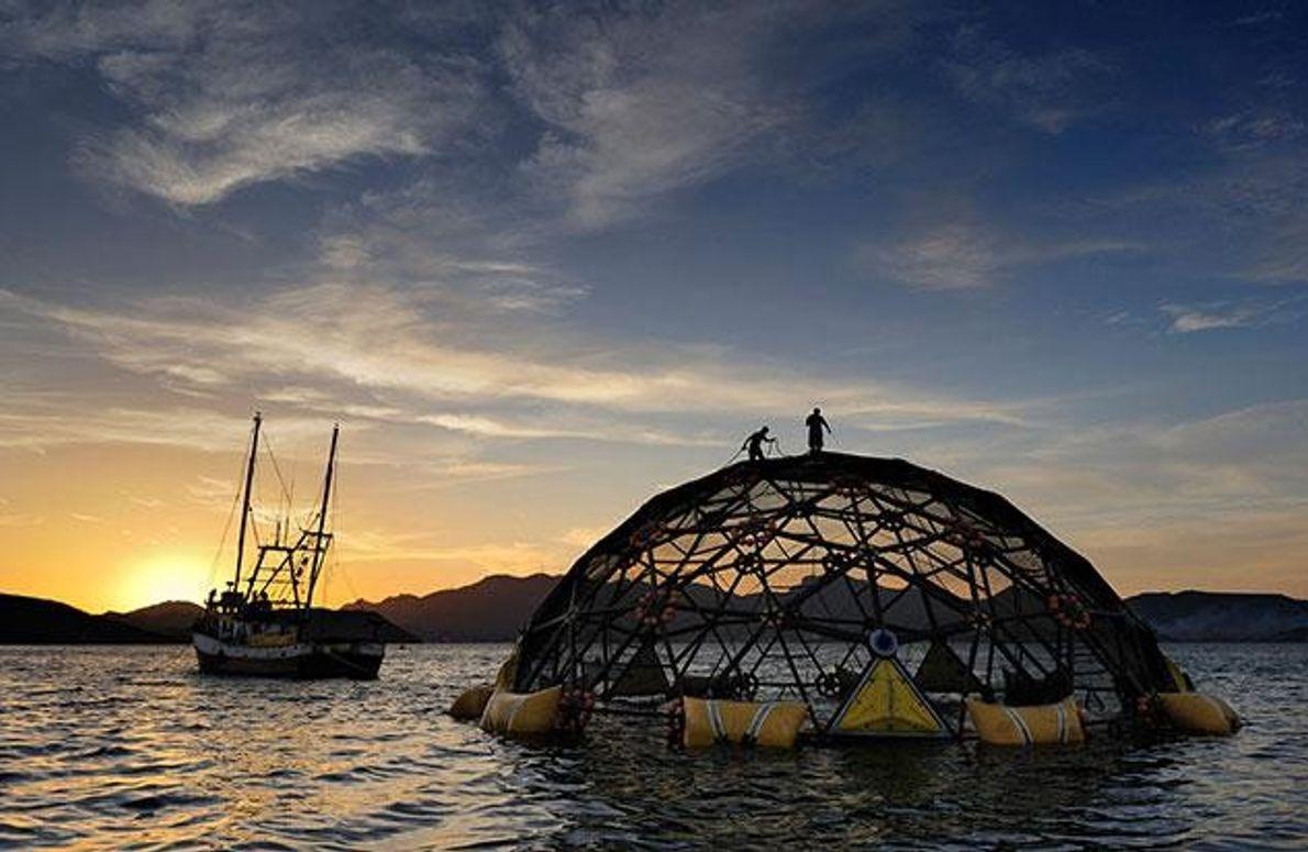 Subventionierte Aquakultur