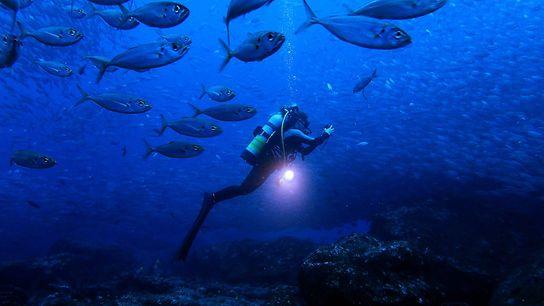 Cramp erkundet die Gewässer um die Galapagosinseln.