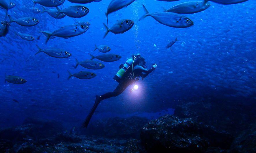 Zwei Generationen unter dem Meer