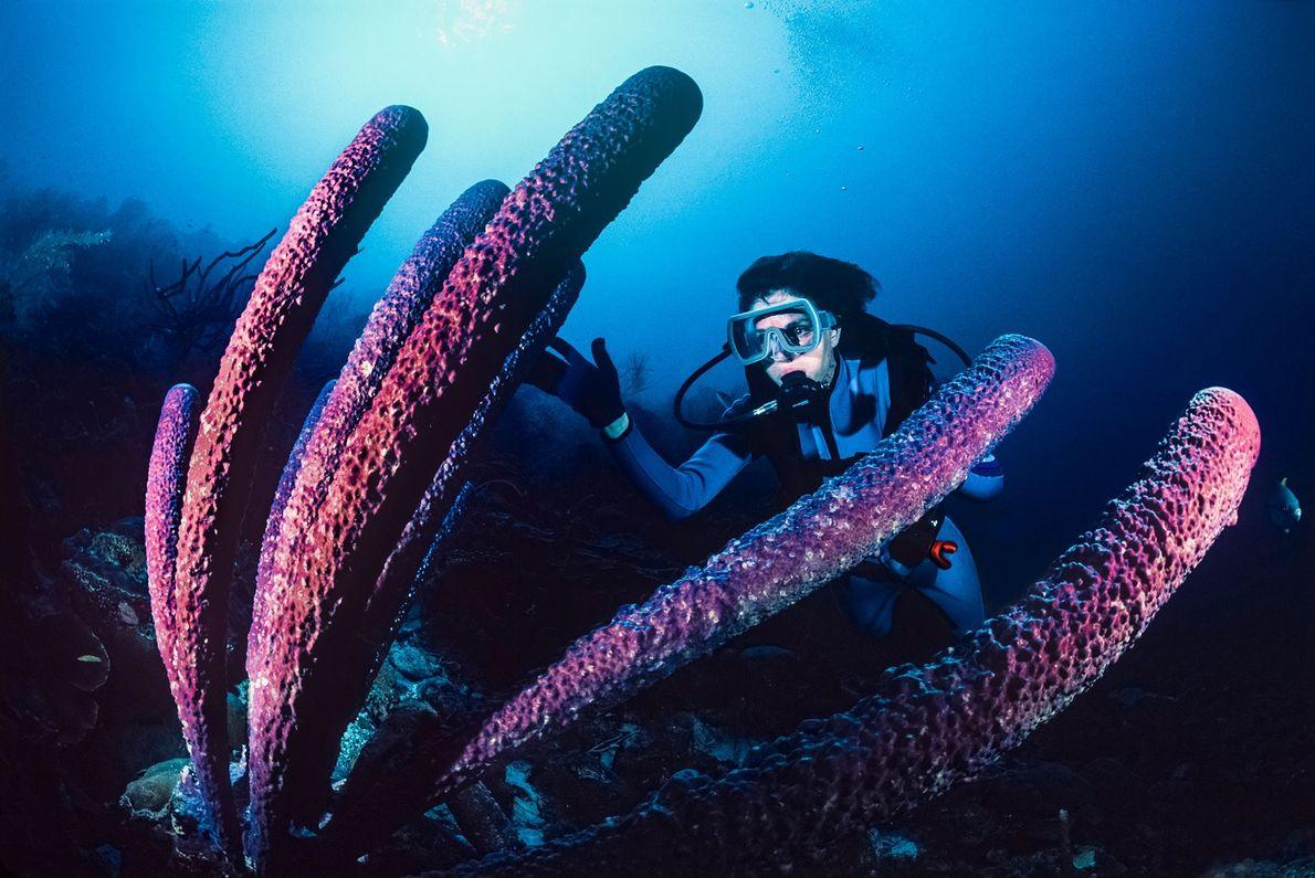 Earle untersucht einen gewaltigen Ofenrohr-Schwamm vor der Küste von Bonaire.