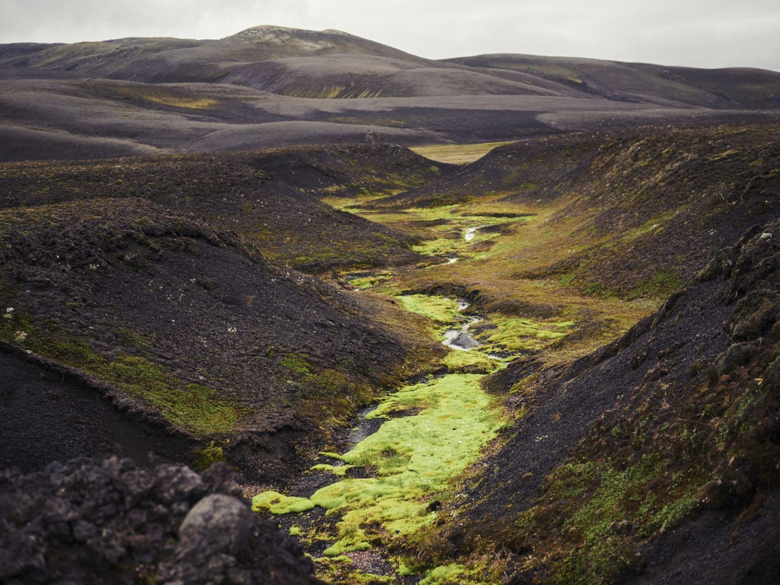 Tag 11: Holaskjol. Nach Sandwüsten und Mondlandschaften wird es jetzt immer grüner. Anfänglich leuchten nur kleine ...