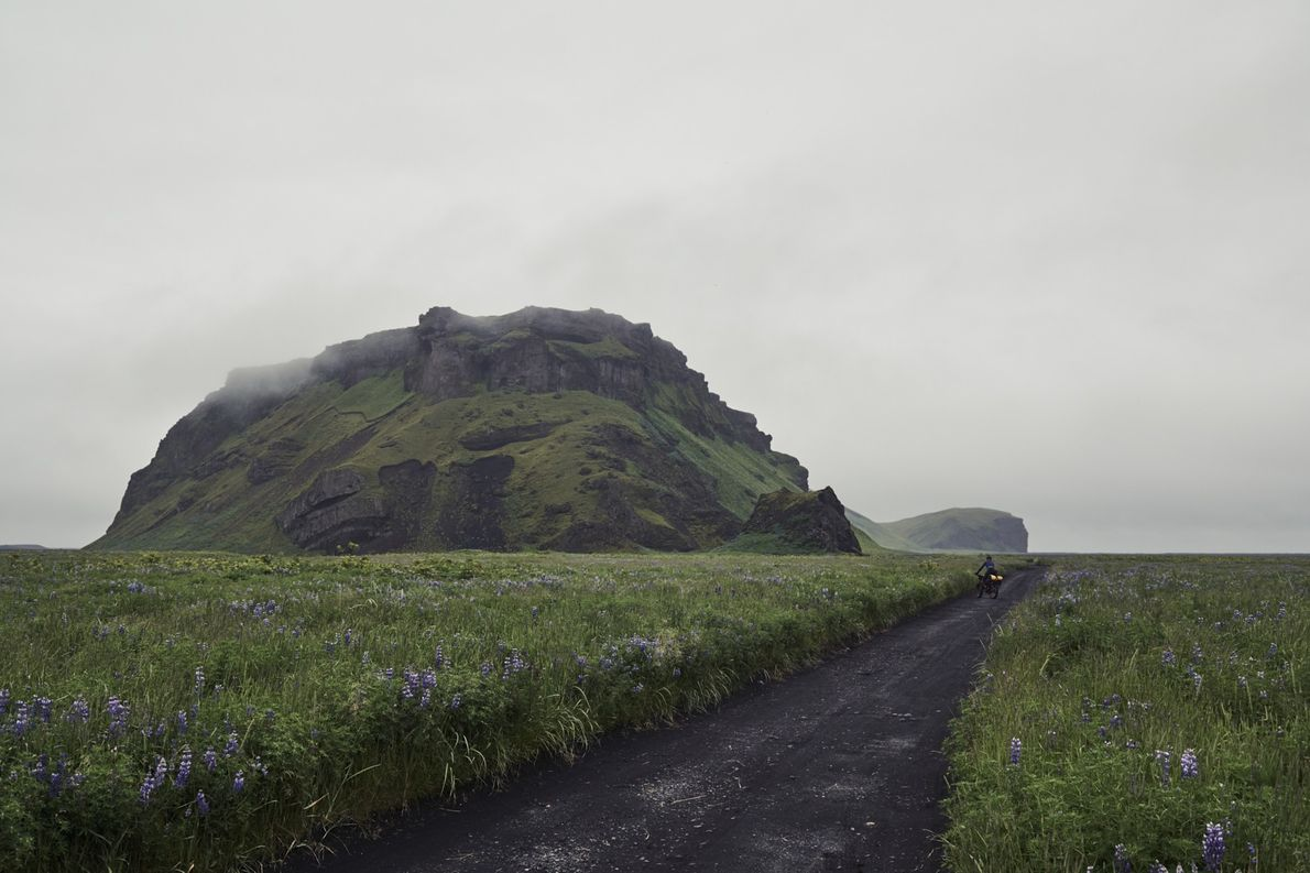 Tag 12: Kötlutangi. Auf dem Inselberg Hjörleifshöfði links im Bild wimmelt es nur so von Blumen ...