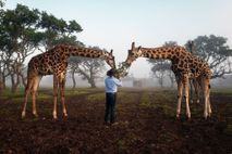 Brian Gilroy füttert Giraffen
