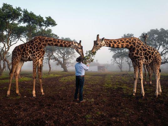 Exotische Tiere in Texas: Ranches für die Zucht und Jagd boomen