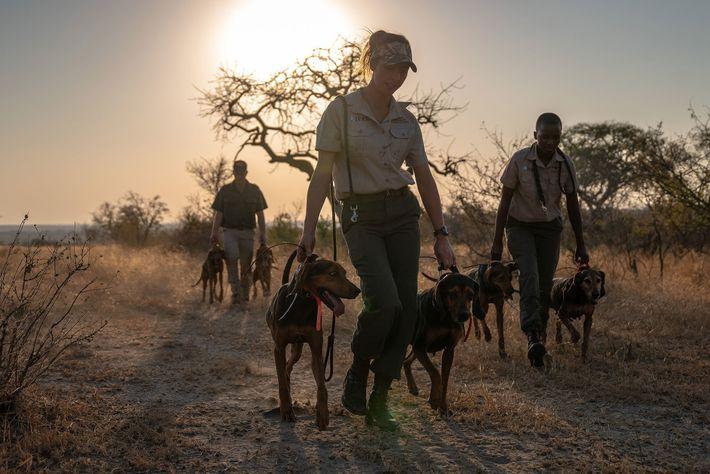 Hunde des Kruger-Nationalparks