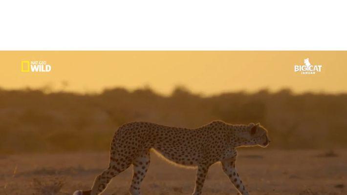 Unter Geparden
