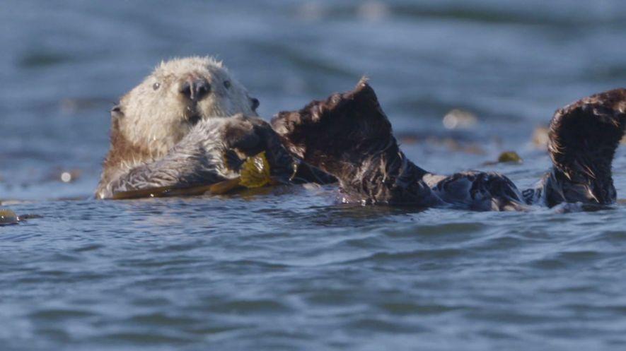 Bertie Gregory: Süße Seeotter