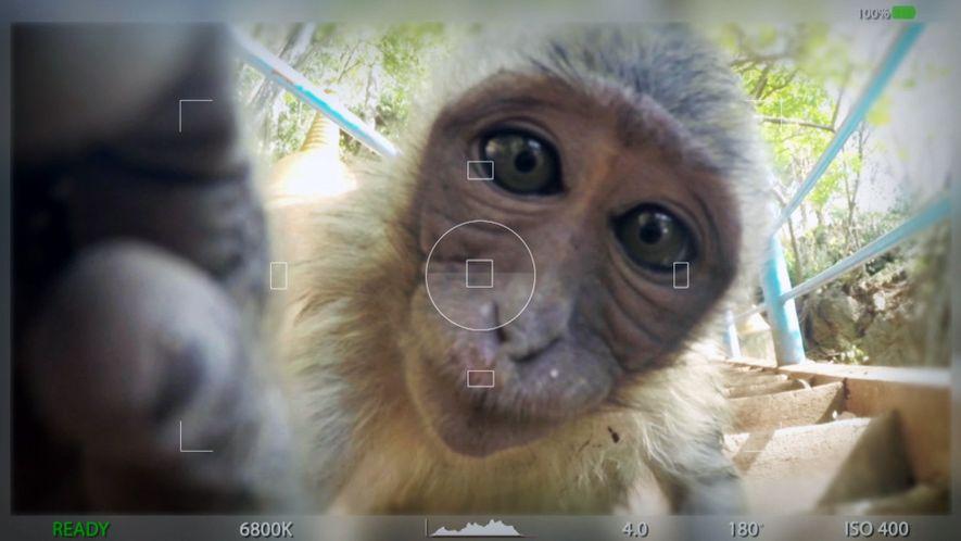 Tierische Selfies
