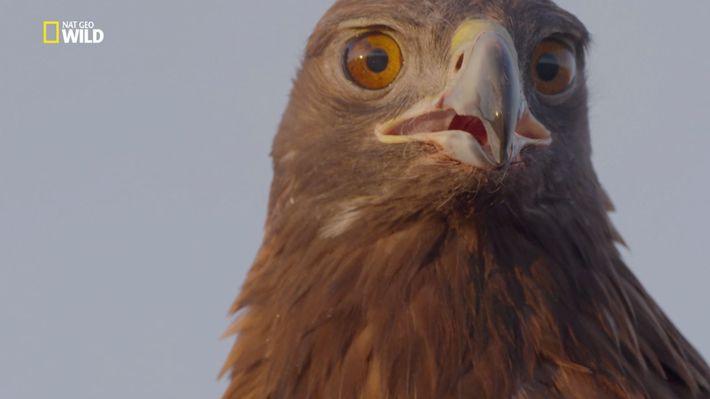 Untamed mit Filipe Deandrade: Vögel