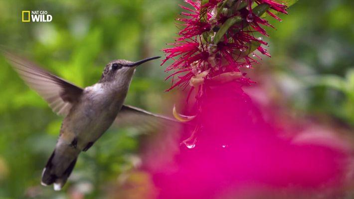 Untamed mit Filipe Deandrade: Kolibri