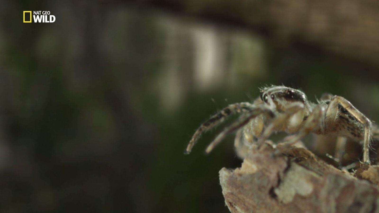 Untamed mit Filipe Deandrade: Springende Spinnen