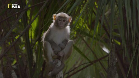 Untamed mit Filipe Deandrade: Affen in Florida