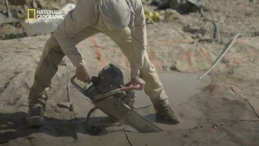 Edmonds Urzeitreich: Wie verschifft man ein Stück Dinosaurier-Friedhof?