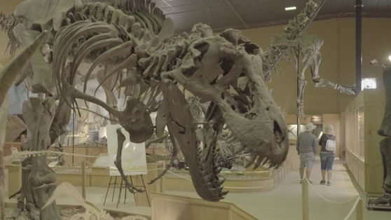 Edmonds Urzeitreich: Das Wyoming Dinosaur Center
