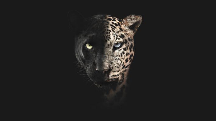 Trailer | Big Cat Februar