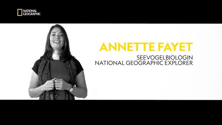 Explorer Annette Fayet: Der Überlebenskampf der Papageientaucher