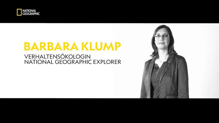 National Geographic Explorer: Barbara Klump