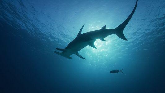 Hai Life im Juli auf National Geographic WILD