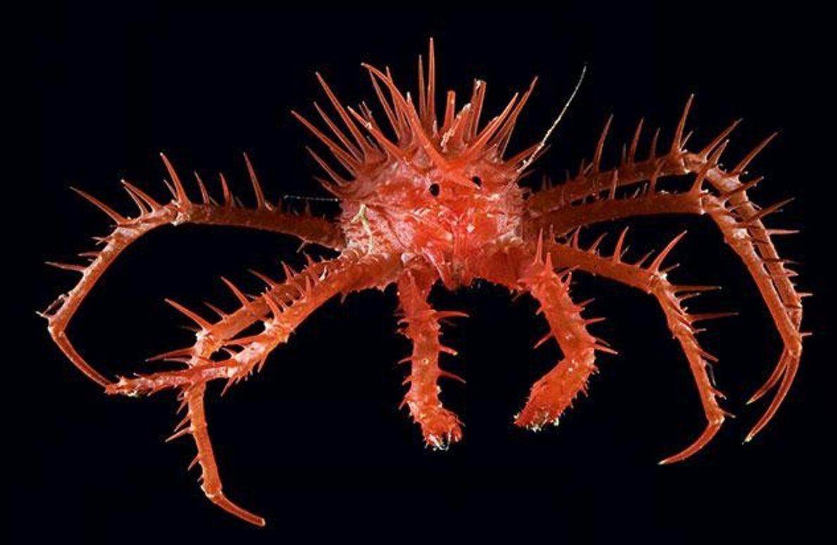 Bis vor wenigen Jahrzehnten war die Wissenschaft noch der Ansicht, der Artenreichtum im Meer sei viel …