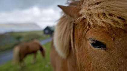 So gelingen Ihnen Tier- und Naturbilder