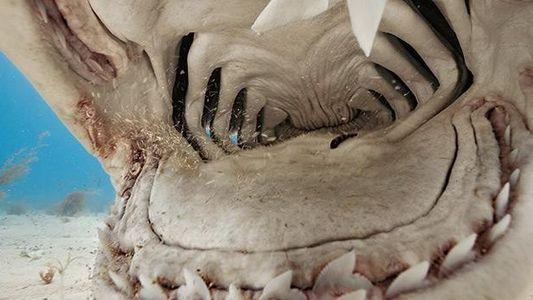 Sechs Fakten über Haie