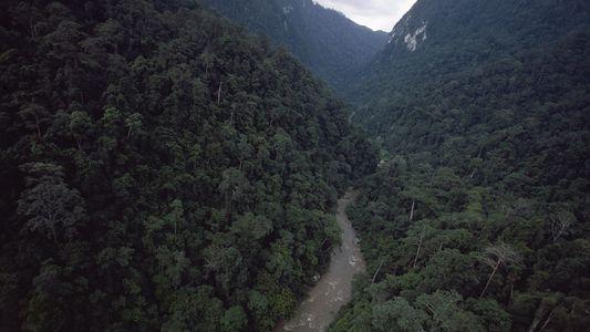 Eure alten Handys können helfen, den Regenwald zu retten
