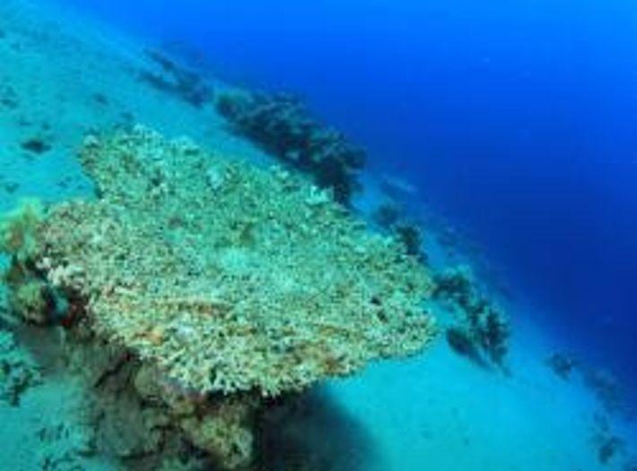 Die Übersäuerung der Meere lässt Korallenriffe sterben.