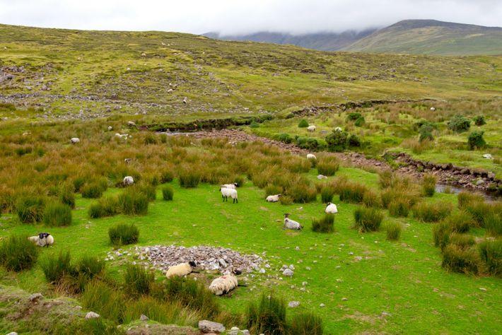 Landschaft der Grafschaft Mayo