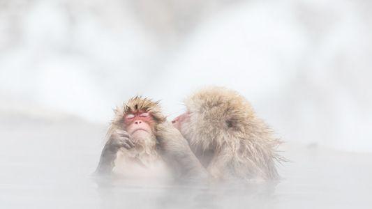 Galerie: 28 Einblicke in das wilde Leben der Tiere