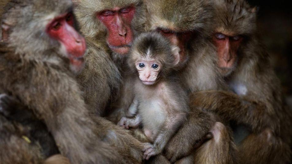 28 Einblicke in das wilde Leben der Tiere