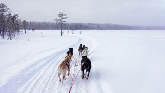 Durchs eisige Lappland