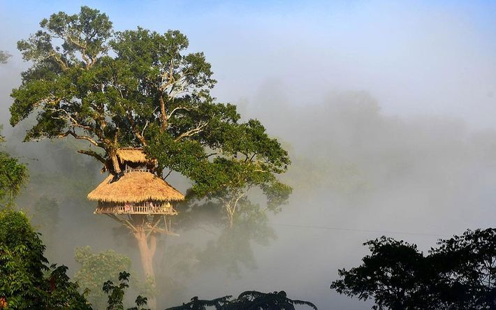 Das Gibbon Experience-Projekt in Huay Xai, Laos