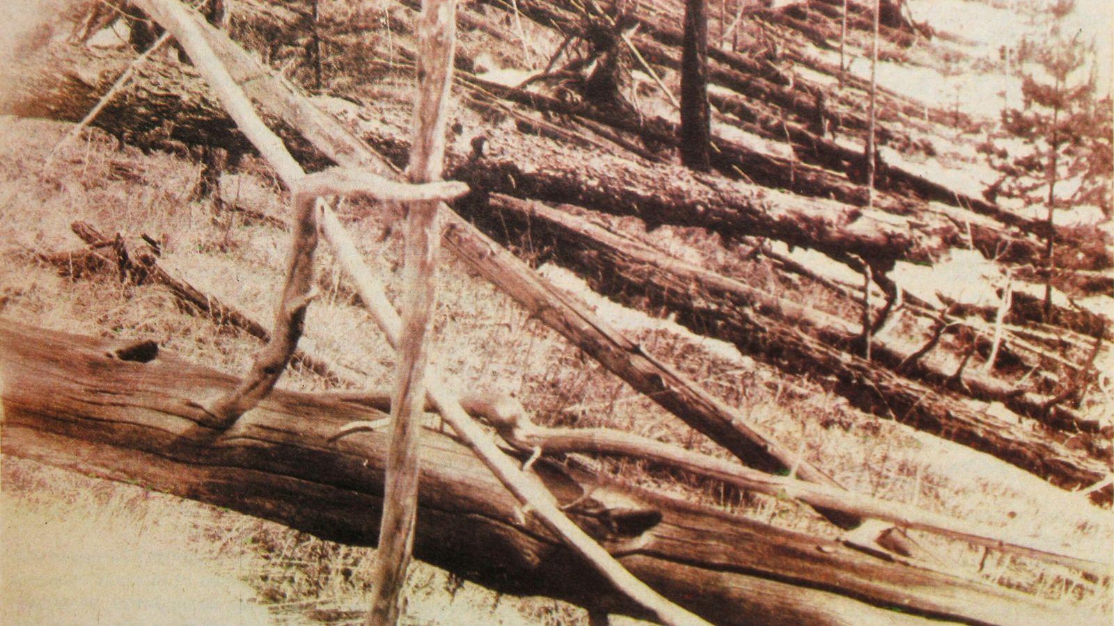 Originalaufnahme der Verwüstung: das Waldgebiet in der sibirischen Taiga ist völlig zerstört