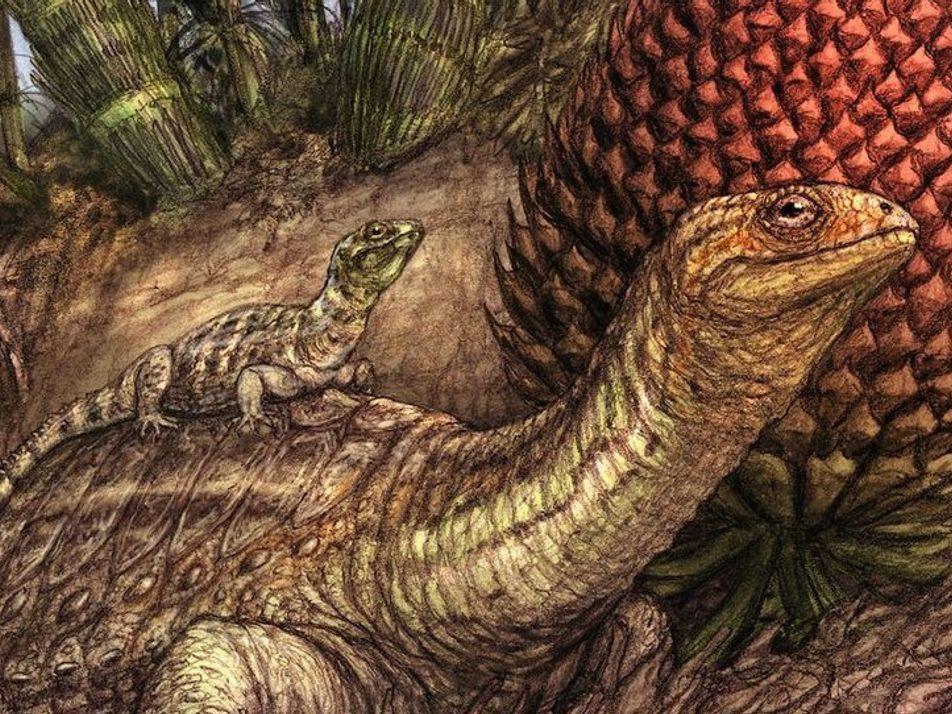Prähistorischer Knochentumor illustriert Ursprünge von Krebs