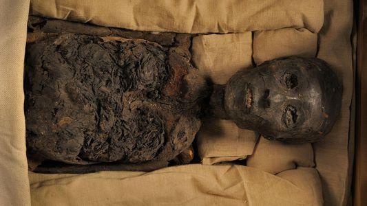 Tutanchamun, Nofretete und ein verzweigter Stammbaum