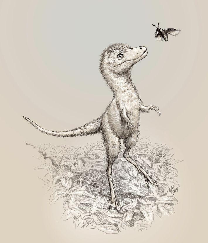 Eine Illustration zeigt, wie ein frisch geschlüpfter Tyrannosaurus rex ausgesehen haben könnte.