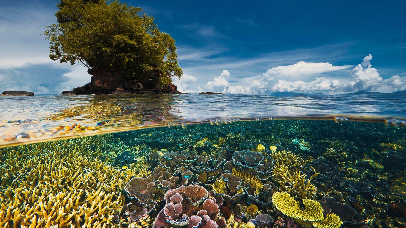 Eine nahe gelegene Halbinsel schützt einen empfindlichen Korallengarten in der Kimbe-Bucht bei New Britain Island in ...
