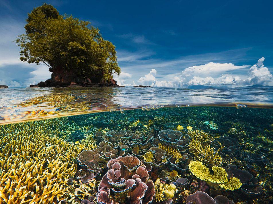 UN-Bericht zur biologischen Vielfalt: Alle Ziele verfehlt
