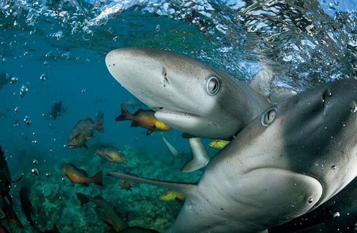 Unberührte Riffe vor Madagaskar