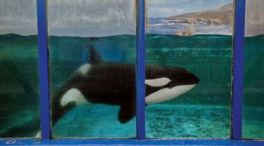 Orcas: Und draußen das Meer...