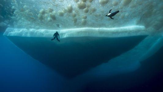 Geheimnisvolles Leben in den Tiefen der Antarktis