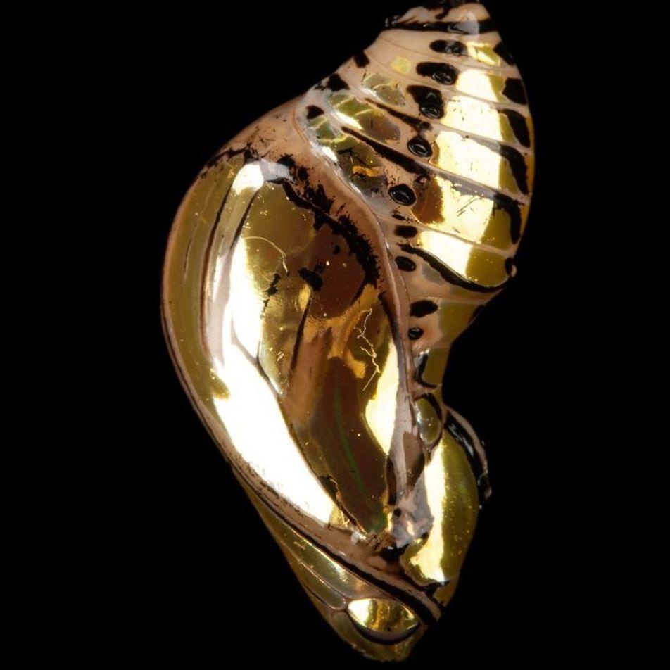 Von der Raupe zum Schmetterling: Metamorphose erklärt