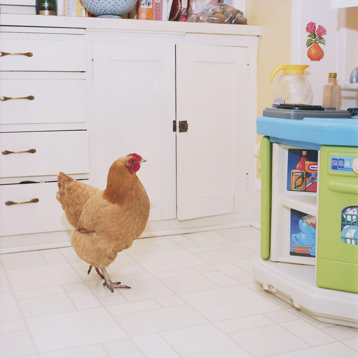 """Hickety, die auf diesem Bild die Küche erkundet, wird teils als Eilieferant gehalten, """"aber ihre Besitzer ..."""