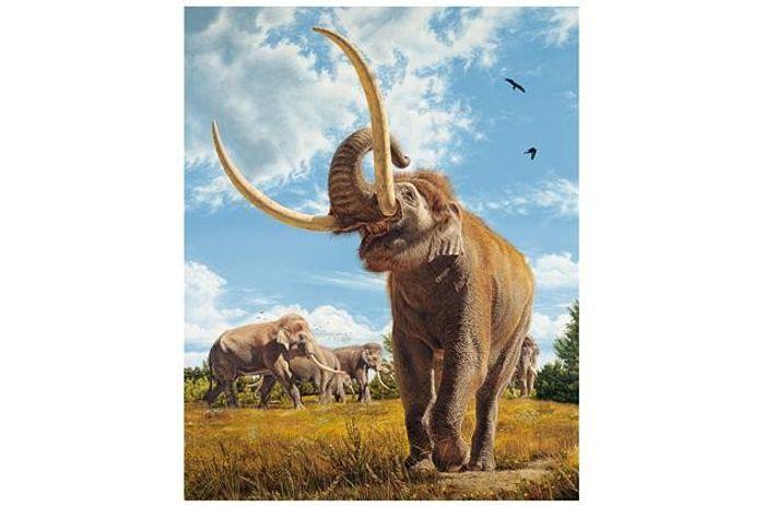 Ur-Elefanten
