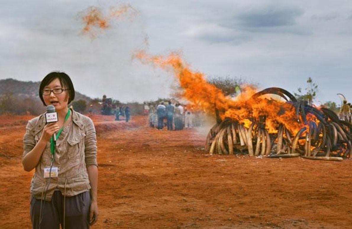 Verbrennung von geschmuggeltem Elfenbein
