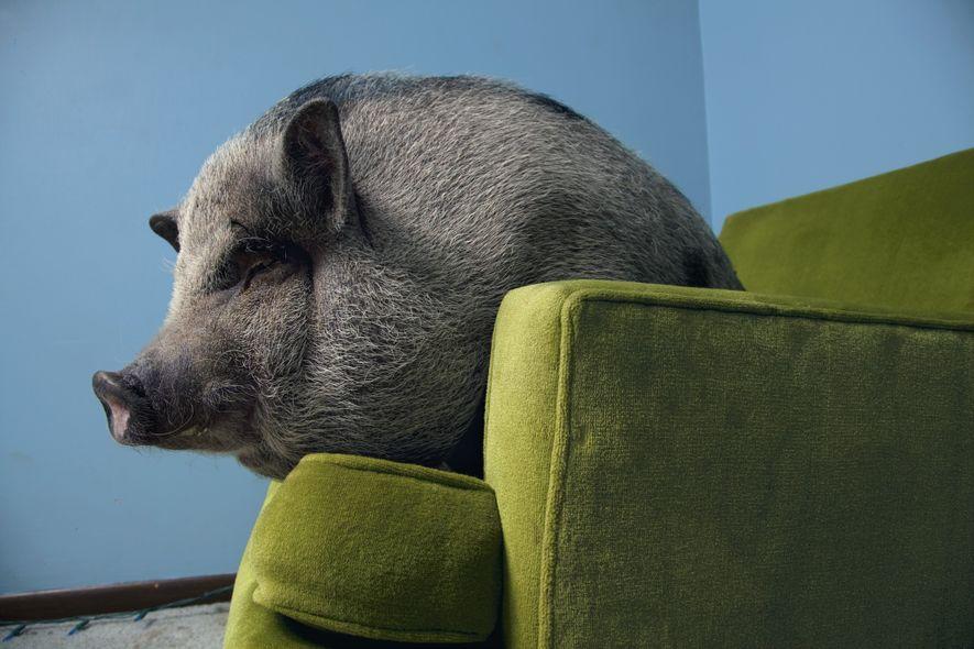 Galerie: 14 überraschend schlaue Tiere