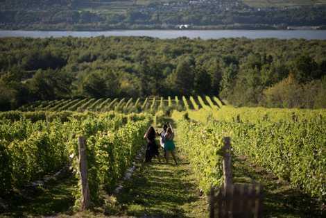 Der Vignoble Isle de Bacchus in der Nähe des Dorfes Saint-Pierre auf der Île d'Orléans ist einer der größten Weinberge. Auf mehr als zehn Hektar wird dort genug Wein für etwa 40.000 Flaschen pro Jahr angebaut.