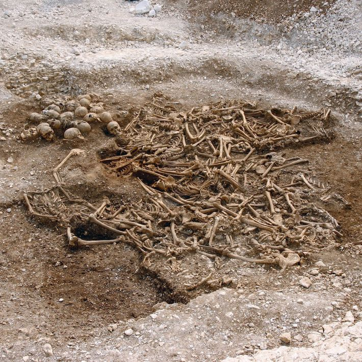 Ein Massengrab von etwa 50 kopflosen Wikingern aus einer Stätte in Dorset, Großbritannien. Einige dieser Überreste ...