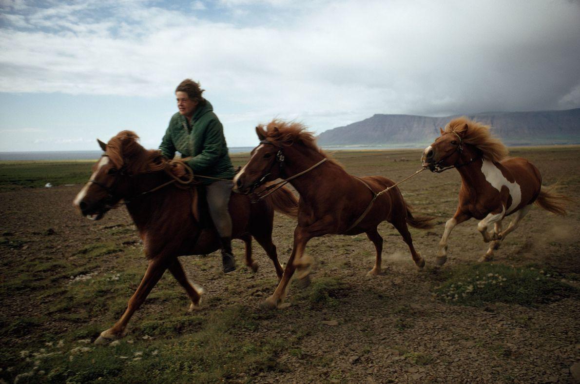 Nachfahren der Wikingerpferde