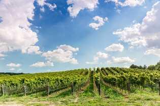 Ein Weingut in Ontarios Wine Country.